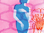 Woman covering breasts and groin, illustration