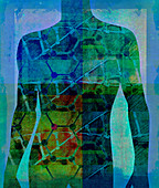 DNA double helix over male human body, illustration