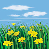 Close up of yellow flowers in sunny meadow, illustration