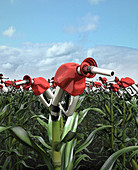 Fuel pumps growing from corn stalks, illustration