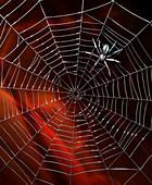 Robotic spider spinning metal web, illustration