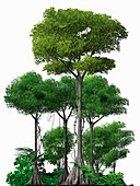Trees growing in rainforest, illustration