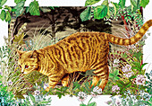 Domestic cat hunting in grass, illustration