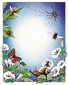 Spider, snail and insects, illustration