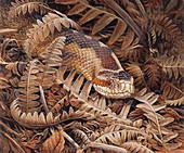 Adder snake camouflaged, illustration