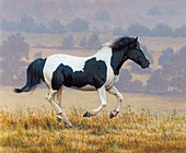 Black and white horse running in countryside, illustration