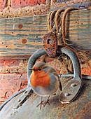 Robin perching on metal bucket, illustration