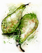 Conference pears, illustration