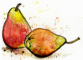 Two Williams pears, illustration