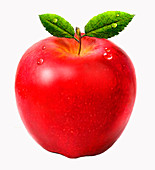 Fresh juicy red apple, illustration
