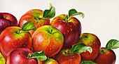 Pile of apples, illustration