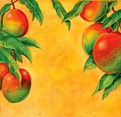 Ripe mangoes growing on branch, illustration