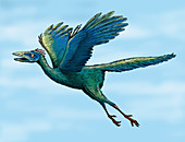 Archaeopteryx flying, illustration