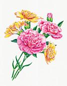 Bunch of carnations, illustration