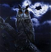Long-eared owl, illustration