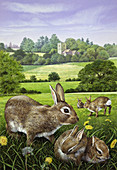 Wild rabbits in dandelion field in countryside, illustration