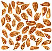 Almonds, illustration