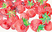 Fresh strawberries, illustration