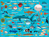 Fish from around the world, illustration