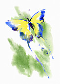 Butterfly, illustration