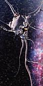 Translucent neuron, illustration