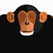 Chimpanzee, illustration
