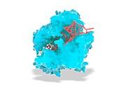 CRISPR-Cas13 gene editing complex, illustration