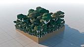 Rainforest, illustration