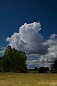 Cumulus mediocris clouds over trees