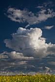 Cumulus congestus clouds in spring