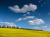 Cumulus humilis clouds in spring