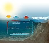Ocean thermohaline circulation mechanism, illustration