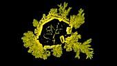 Potassium chromate crystallization