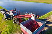 Cranberry farming, Michigan, USA
