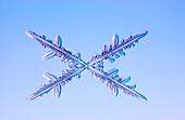 Crossed needle snowflakes, light micrograph