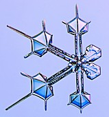 Split snowflake, light micrograph