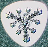 Triangular form snowflake, light micrograph