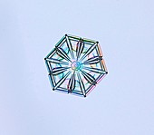 Sectored plate snowflake, light micrograph