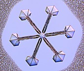 Star and plate snowflake, light micrograph