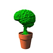 Growing brain food, conceptual image