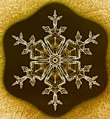 Stellar dendrite snowflake, light micrograph