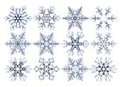 Snowflakes, light micrograph