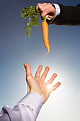 Reaching for a carrot