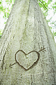 Heart sign carved in a tree