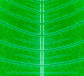 Biomimetics, conceptual illustration