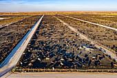 Cattle feedlot,Colorado,USA