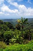 El Yunque National Forest,Puerto Rico