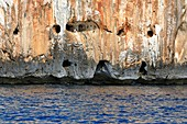 Caves in a sea cliff on Sardinia,Italy