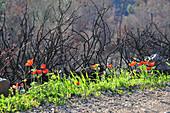 Post forest fire rehabilitation