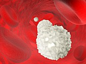 Dendritic cell and red blood cells, illustration